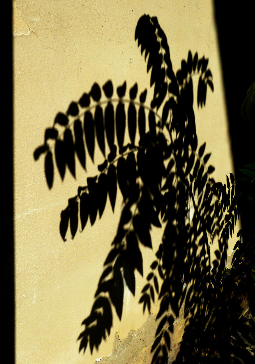 shadow, no people, sunlight, day, close-up, indoors, nature, animal themes