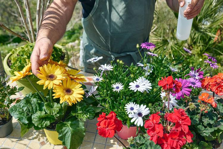 Gardener is spraying clean water or liquid fertilizer on plants at flower shop counter.