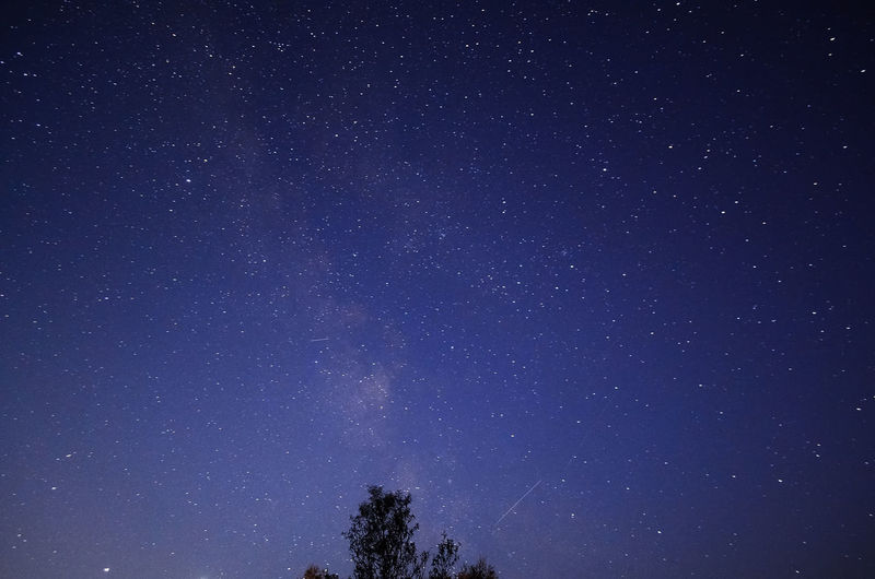 Low angle view of trees against star field at night