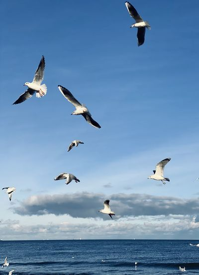 Low angle view of seagulls flying over sea against sky