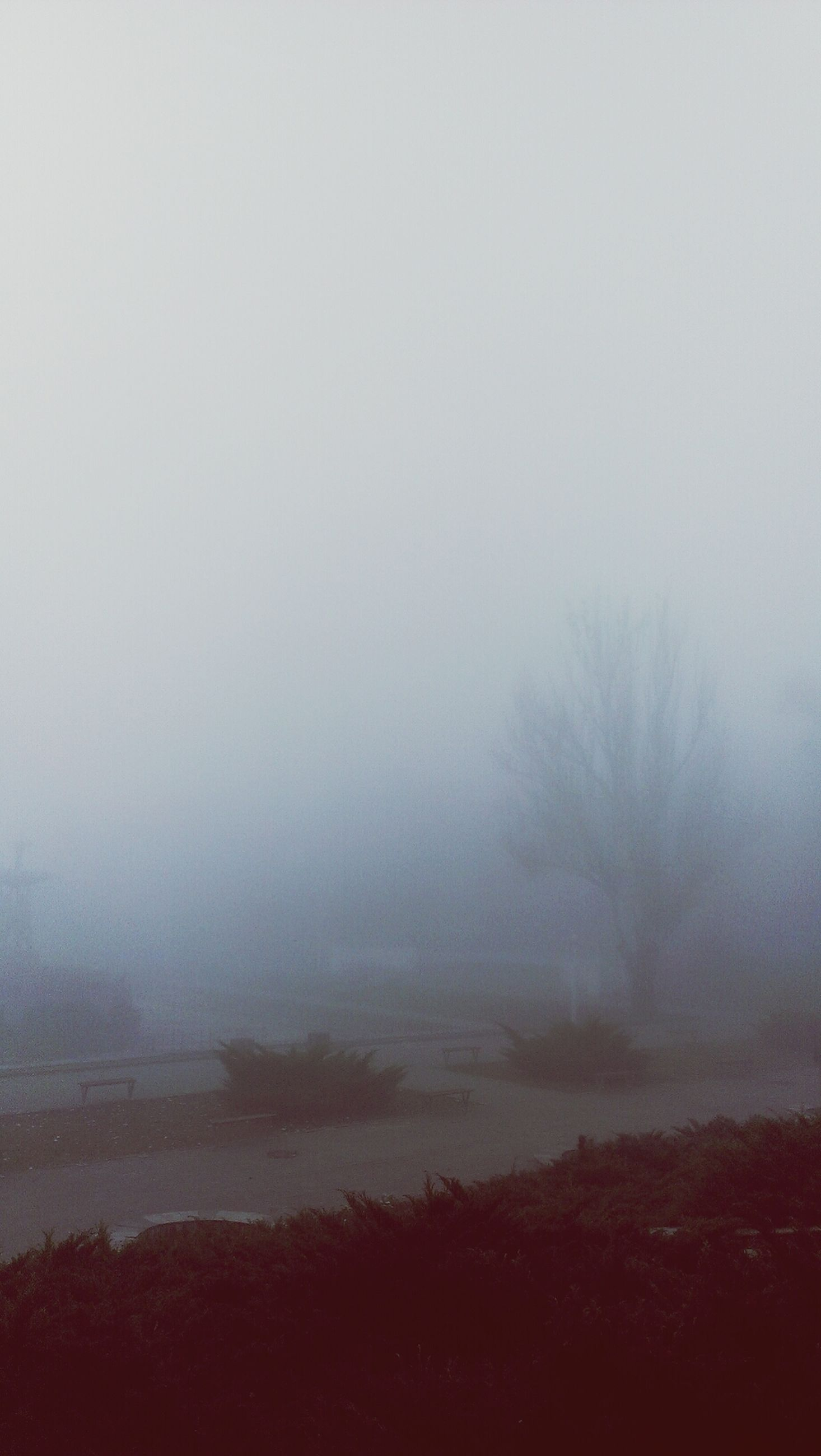 fog, foggy, tranquil scene, tranquility, weather, scenics, beauty in nature, water, tree, nature, copy space, mist, landscape, non-urban scene, idyllic, lake, sky, remote, outdoors