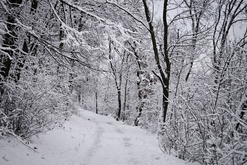 Bare trees in snow covered landscape