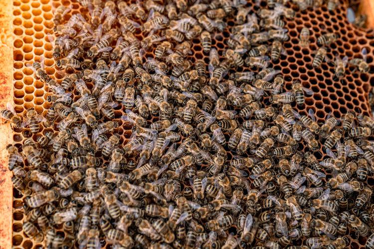 Full frame shot of bee on rock