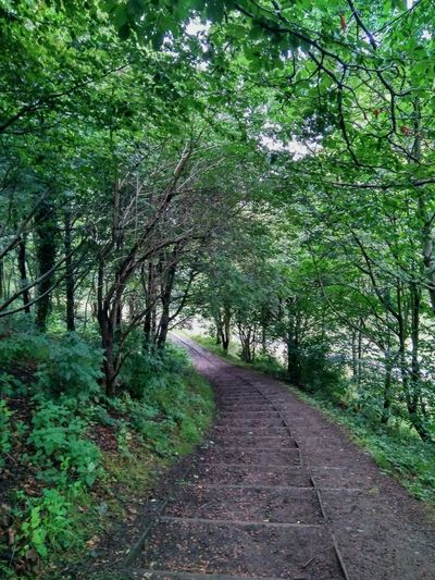 Holyrood Park Green Color Tree Nature Outdoors No People Edinburgh Steps