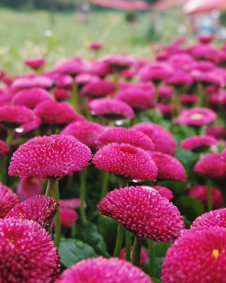 Flowers,Plants & Garden Pink Flower Springtime Dublin Istanbul City Life In Colors There Is Life Everywhere Beautiful Nature