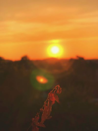 Last Sunshine Lastsunset Sunset Orange Color Sky Beauty In Nature Sun Tranquility Nature Scenics - Nature Sunlight Focus On Foreground No People Tranquil Scene Outdoors Landscape Lens Flare Growth Environment Plant Close-up Field