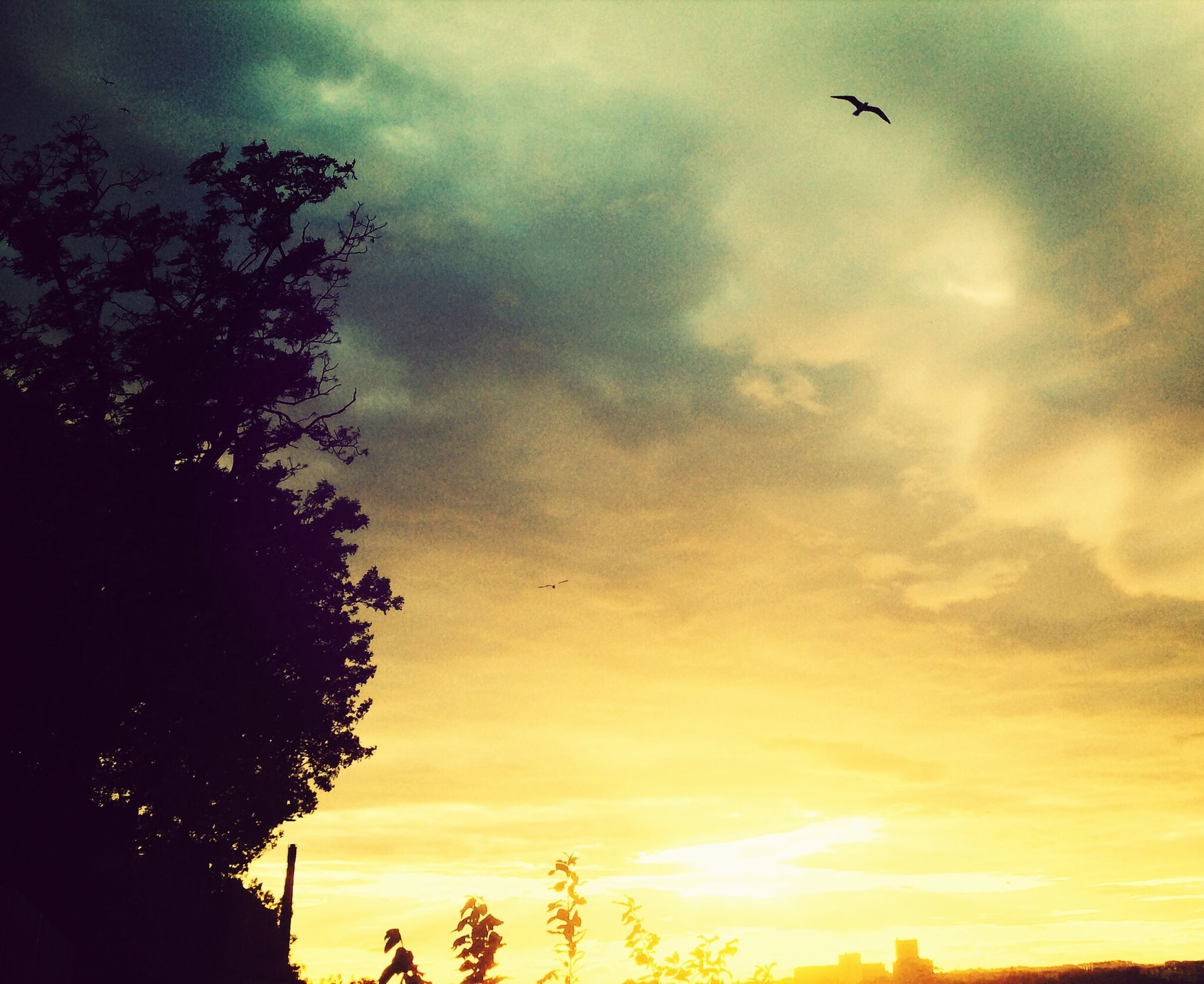 sky, low angle view, silhouette, cloud - sky, sunset, bird, flying, cloudy, nature, beauty in nature, animal themes, tree, cloud, scenics, tranquility, animals in the wild, tranquil scene, wildlife, dusk, overcast