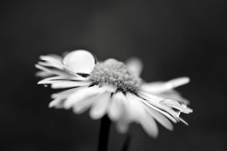 Close-up of fresh wet flower