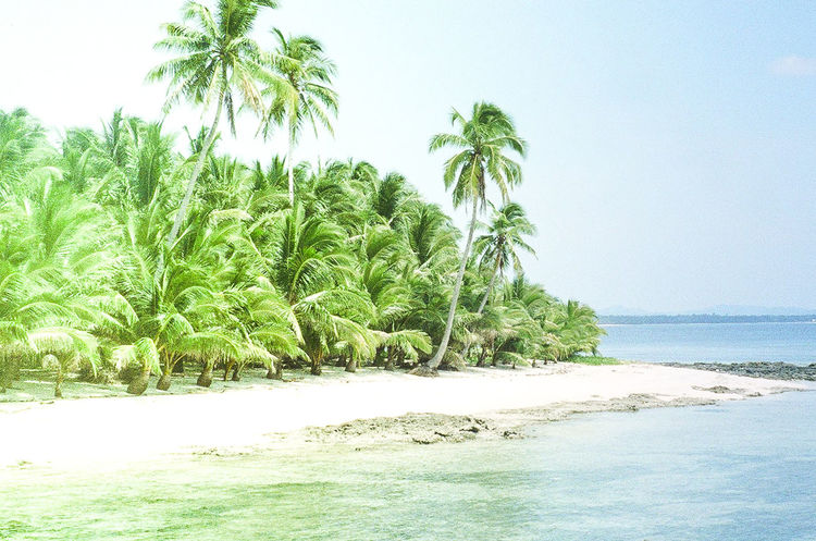 a remote island in the Philippines Plant Water Tropical Climate Beauty In Nature Sea Palm Tree Tranquility Tranquil Scene Growth Nature Green Color No People Beach Clear Sky Horizon Over Water Coconut Palm Tree Bright 35mm Film Secluded  White Sand Film Photography Light Leak Surf Safari Copy Space
