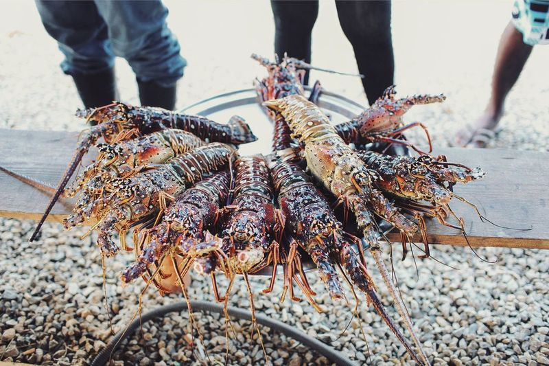 Exotic Sea Treasures Lobsters Sea Food Fishing Outdoors Nature Fishing Industry