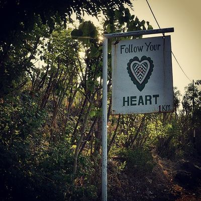 Don't follow what you've been told you're supposed to do. If you don't follow your heart you might spend the rest of your life wishing you had... Amed Bali Travelling Rtw Indonesia LifeOnTheMove FollowYourHeart LifeAuthentic Quotes