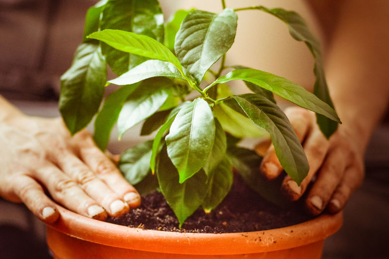 Cropped hands planting plant in pot