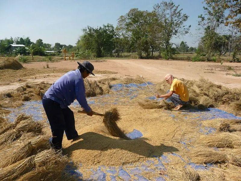 Thai farmer Working Men Farm Worker Manual Worker Sunlight People Plowed Field Farmer