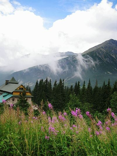 Mountains Nature Flower Travel Destinations Travel Scenics Plant Mountain Range Cloud - Sky Beauty In Nature Landscape Mountain Sky Tradition Outdoors