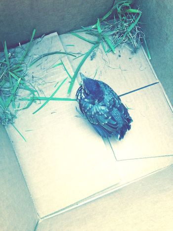 Injured Bird Bird In A Box Bird Rescue Rescue Bird Bird Nature