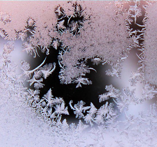 Could Art Art Beauty In Nature Close-up Cold Temperature Day Fragility Frozen Frozen Art Full Frame Growth Ice Indoors  Nature No People Plant Snow Snowflake Vulnerability  White Color Winter