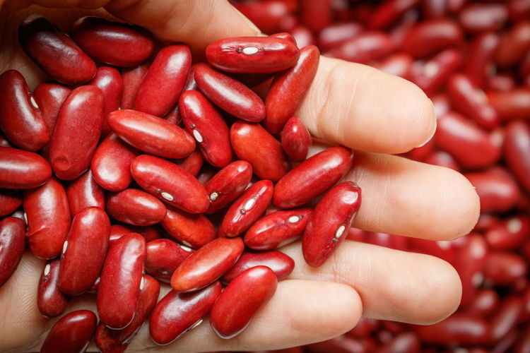 Closeup of red bean in men hand Raw Seed Vegetarian Azuki Bean Dry Food Grain Hand Healthy Ingredient Protein Red Bean Uncooked