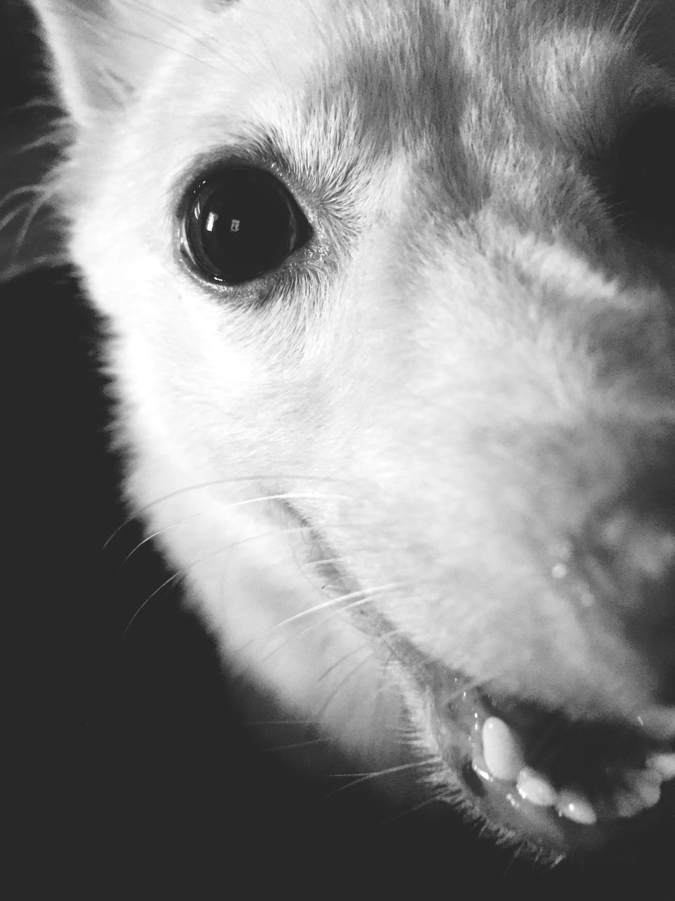 pets, one animal, dog, domestic animals, animal themes, animal head, close-up, mammal, no people, indoors, animal nose, portrait, day