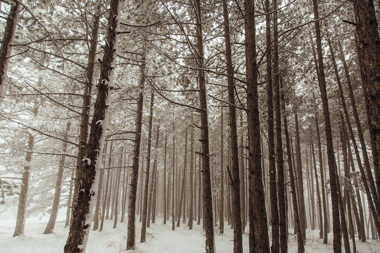 Coniferous forest in snow EyeEm Best Shots EyeEm Nature Lover Nature Serbia Travel Weather Beauty In Nature Branch Canon Cold Temperature Fog Forest Landscape Nature Snow Tranquility Tree Winter WoodLand