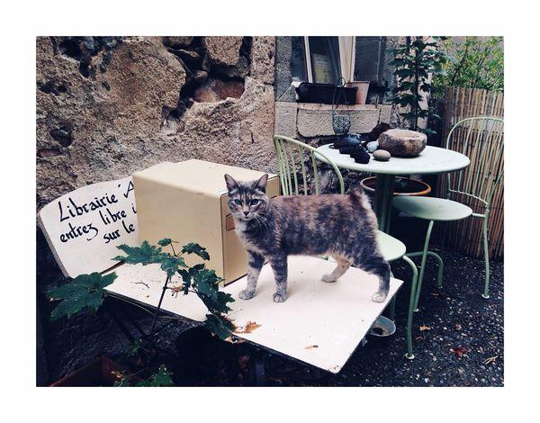 Lecteur à moustache Domestic Cat Cat Pets Animal Themes One Animal Domestic Animals Feline Mammal No People Day Outdoors Plant Sitting Portrait