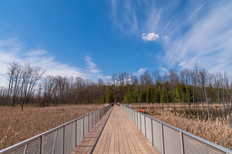 Boardwalk amidst plants and trees against sky