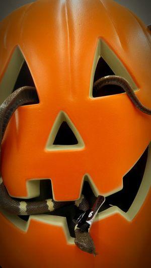 Close-up Orange Color Pumpkin Art Creativity No People Man Made Object Halloween Snake Jack O' Lantern