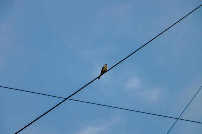 on the line. #2 Animal Animal Themes Animal Wildlife Animals In The Wild Bird Blue Cable Connection Day Electricity  Low Angle View Nature No People One Animal Outdoors Perching Power Line  Power Supply Sky Telephone Line Vertebrate