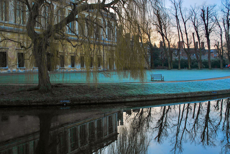 Reflection of bare trees in swimming pool