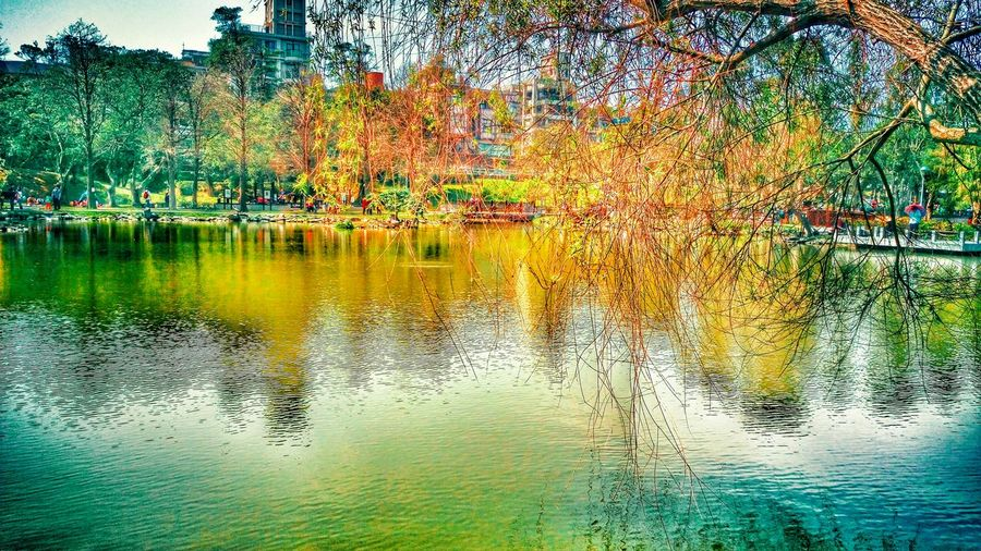 Taking Photos Lake View Green Green Green!  Nature Inverted Images Color Photography Reflection Hugging A Tree 大湖公園