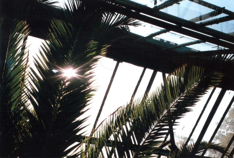35mm Analogue Photography Olympus Beauty In Nature Day Green Color Growth Leaf Lens Flare Nature No People Outdoors Palm Leaf Palm Tree Plant Plant Part Sky Sun Sunbeam Sunlight Tranquility Tree Tropical Climate Tropical Tree