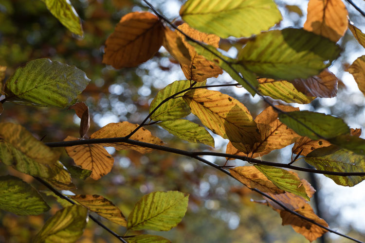 Finally, some autumn colors Autumn Autumn Beauty In Nature Branch Close-up Focus On Foreground Leaf Nature Outdoors Plant