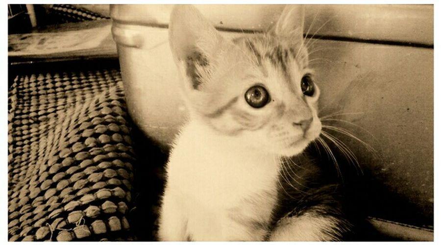 Baby cat Hi! Animals I Love My Cat Cat Beautiful Taking Photos