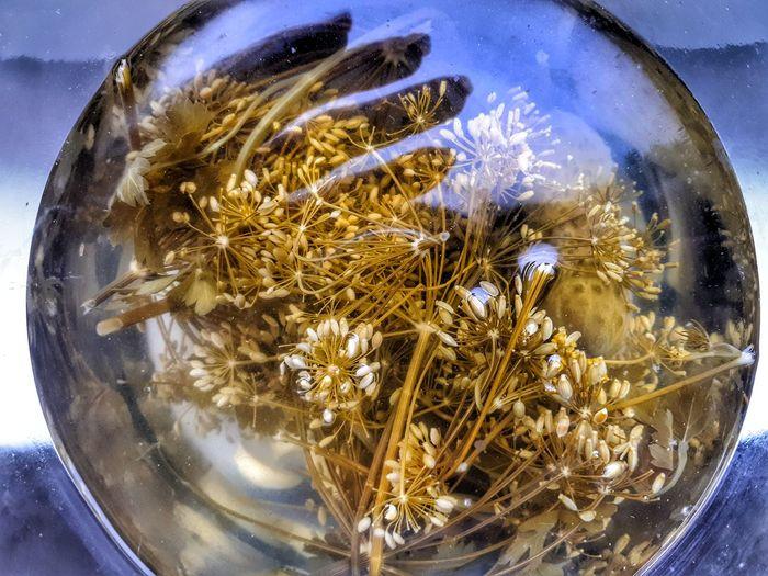 #EyeEmNewHere #art Water Sea Life Jellyfish Close-up EyeEmNewHere