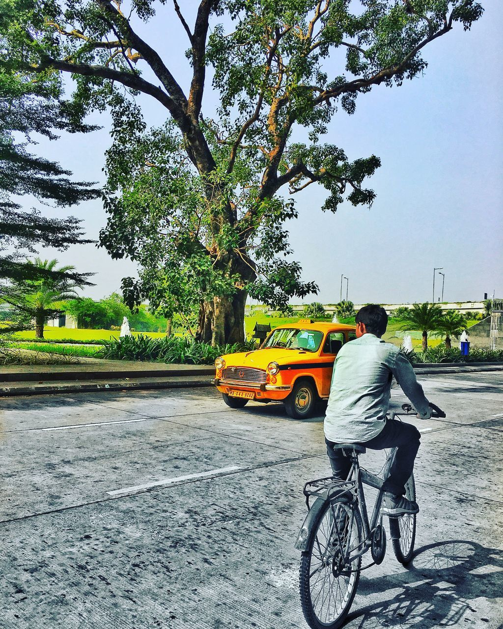 tree, transportation, mode of transport, land vehicle, bicycle, day, street, outdoors, real people, yellow, road, one person, city, men, architecture, sky, people