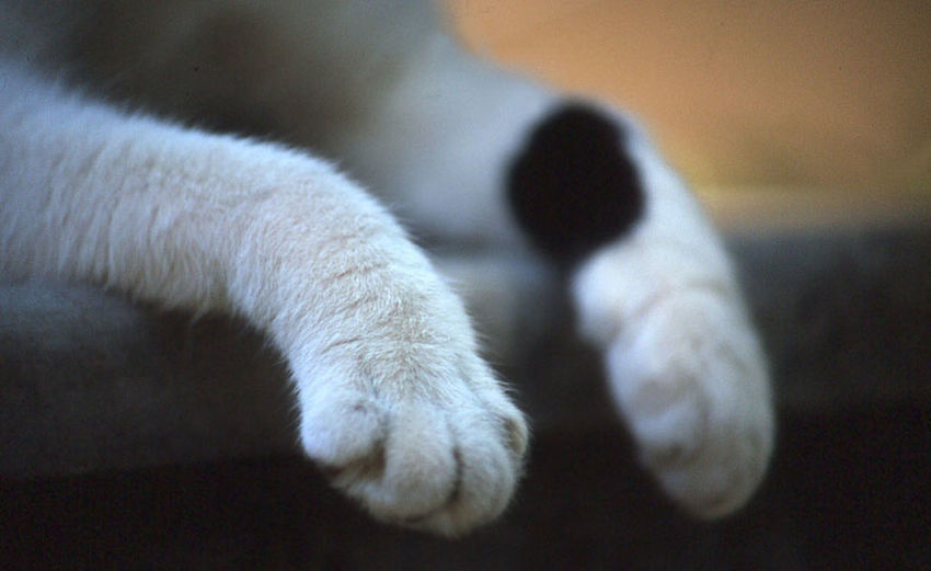 Close-up of cat paws