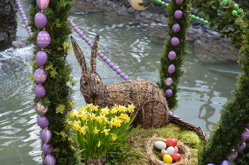 Plant Water Nature Flowering Plant Flower No People Lake Animal Day Animal Themes Vertebrate Beauty In Nature Egg Animals In The Wild Animal Wildlife Growth High Angle View Outdoors One Animal Purple Easter Easter Bunny Easter Decoration