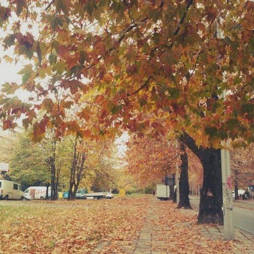 Esen bebchou :D Autumn Trippin