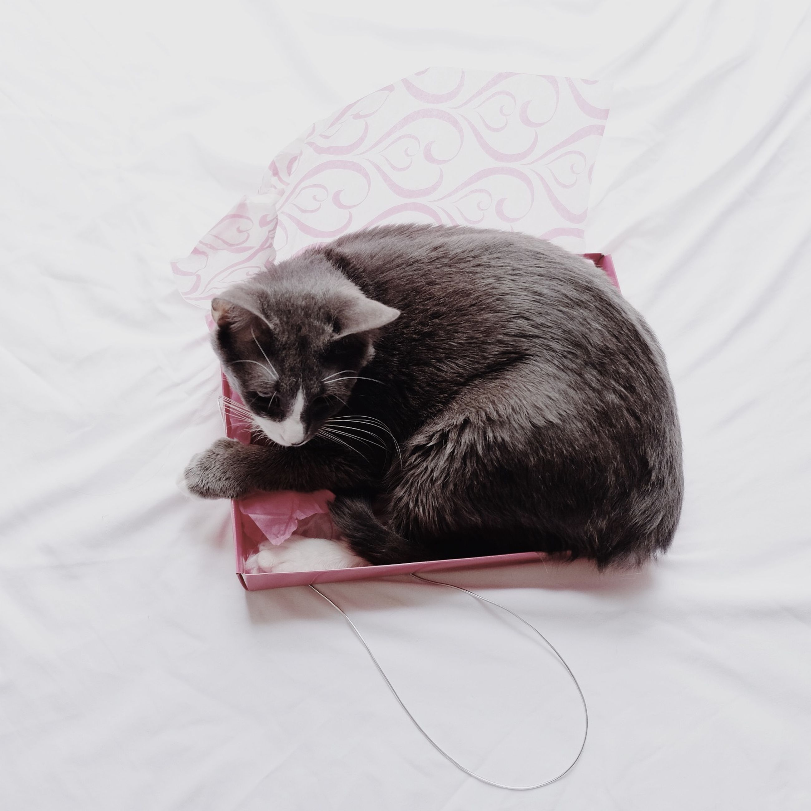 animal themes, indoors, one animal, pets, domestic animals, mammal, black color, high angle view, relaxation, table, home interior, bed, dog, home, no people, domestic cat, close-up, young animal, cat, black