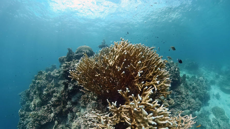 Low angle view of coral swimming in sea
