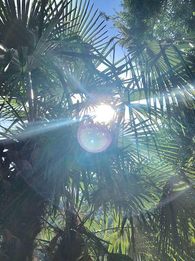 Palm Tree Lugano, Switzerland Lake View Sunlight Shimmering Light Breaking