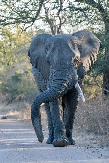 Elephant in a tree