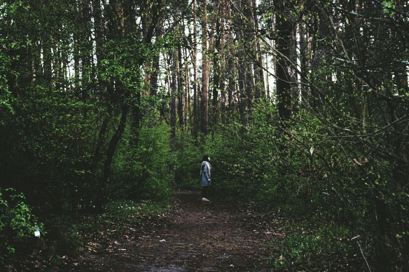 Tree Forest Walking Rear View Hiking One Person Full Length Nature People Growth Outdoors WoodLand Exploration Day Vacations Real People Tree Area Adult Adventure Standing
