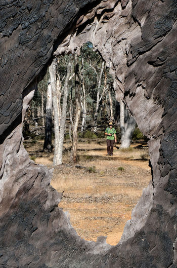 Through The Looking Glass Tree Hollow Looking Through Dryandra Woodland Nature Day Leisure Activity Real People One Person Full Length Outdoors Hiking Nature