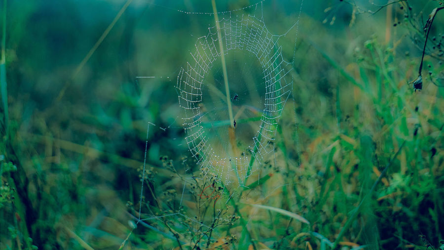 Dew Animal Animal Themes Animal Wildlife Animals In The Wild Beauty In Nature Close-up Dandelion Seed Day Fog Fragility Green Color Growth Land Nature No People One Animal Outdoors Plant Selective Focus Transparent Vertebrate Vulnerability  Web