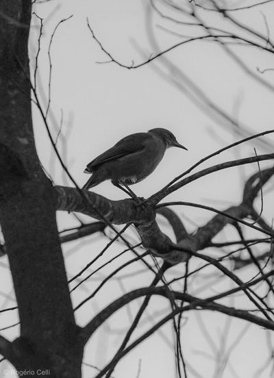 Nature Vibes | Birds Bird One Animal Perching Animals In The Wild Animal Themes Branch Animal Wildlife Tree No People Bare Tree Nature Day Outdoors Beauty In Nature Close-up