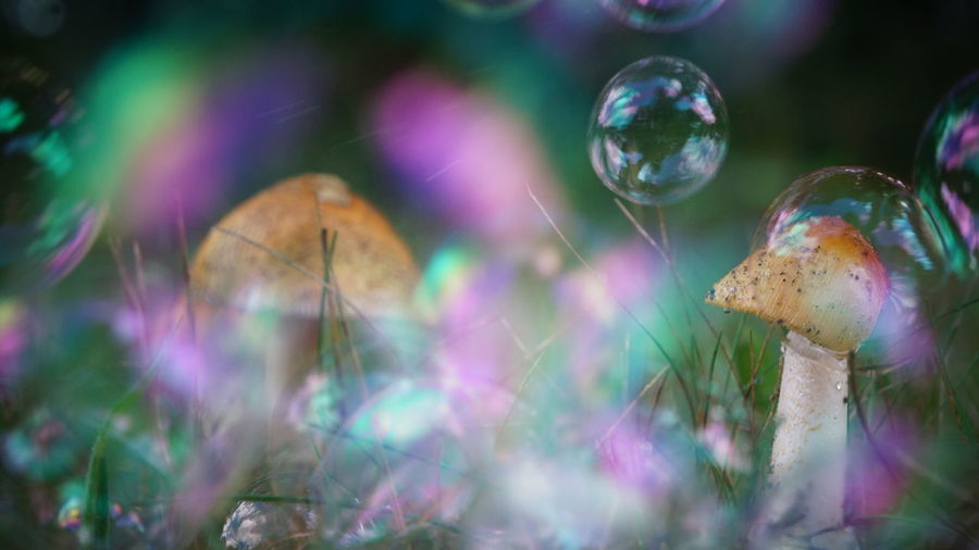 Beauty In Nature Bubble Circle Close-up Day Extreme Close-up Field Focus On Foreground Fragility Green Growth Magical Multi Colored Natural Condition Nature No People Outdoors Plant Selective Focus Soap Bubbles Sphere The Magic Mission Tranquil Scene Tranquility Live For The Story