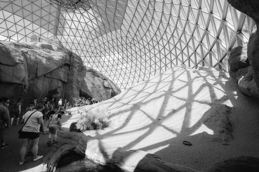 Visual Journal August 2017 Henry Doorly Zoo Omaha, Nebraska Black & White Camera Work EyeEm Best Edits EyeEm Best Shots EyeEm Masterclass EyeEm Gallery EyeEmBestPics Fujinon 10-24mm F4 Geodesic Dome Omaha, Nebraska Photo Essay Unrecognizable People Visual Journal Zoo B&w B&w Photography Blackandwhite Day Desert Biome Geometry Indoors  Light And Shadow Monochrome One Person People Photo Diary Real People Schwarzweiß Shadows
