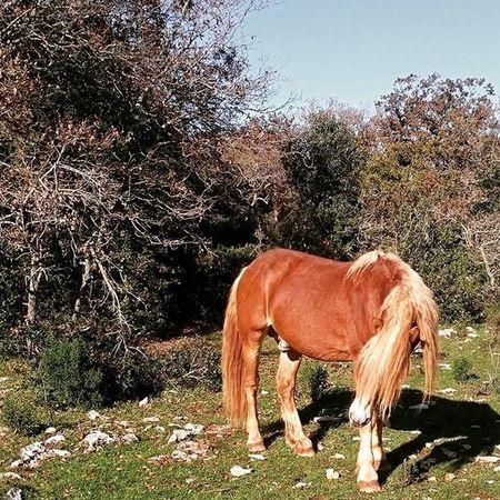 Nik Youngwildandfree Wilde 365days Horse Haflinger Nature Keepcalmandsavethenature Wintertime Wood Winter2015