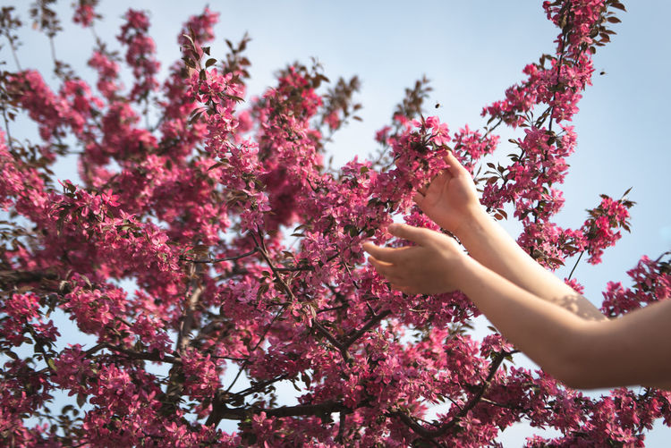 Invitation Spring Floral Flora Environment Human Hand Human Body Part Hand Cherry Blossom Outdoors Springtime Day Branch Real People Freshness Lifestyles Beauty In Nature Growth Nature Flowering Plant Flower One Person Tree Plant Body Part Pink Color Low Angle View Fragility Finger