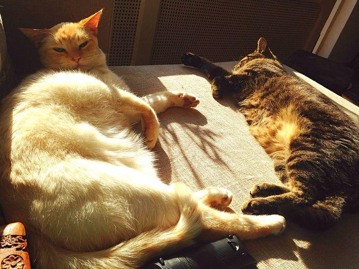 Cats enjoying sun